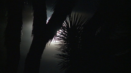 Time Lapse of Full Moon Rising Behind Joshua Tree