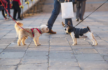 two dogs meeting on a walk