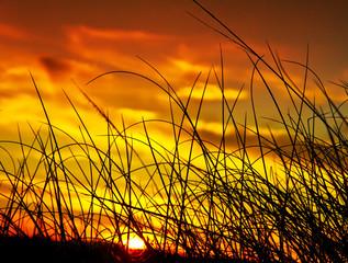 puesta de sol entre la vegetacion