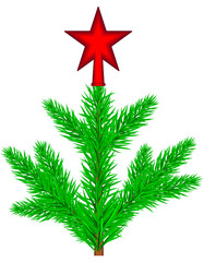 Conifer tree with star