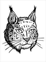 Head of Lynx - Black and White Illustration