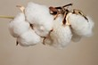 Twig with soft cotton flower balls - 78845687