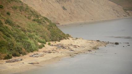 Elephant Seals at Point Reyes California