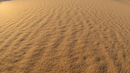 Pan of Golden Sand Dunes