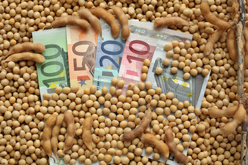 Agricultural concept, soybean and money, Euro banknote