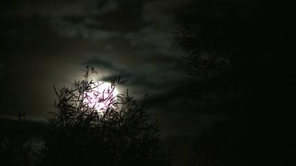 Time Lapse of Full Moon Rising Behind Brush