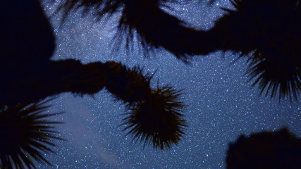Time Lapse Dolly Pan of Joshua Tree at Night