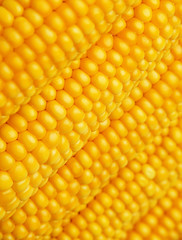 corn in detail