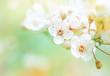 Beautiful spring blooming