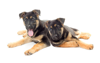 two puppies looking