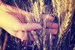hand in a wheat field