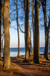 canvas print picture - Ostseewald