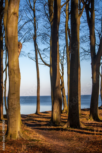 canvas print picture Ostseewald