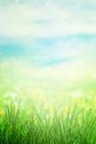 Spring field in morning