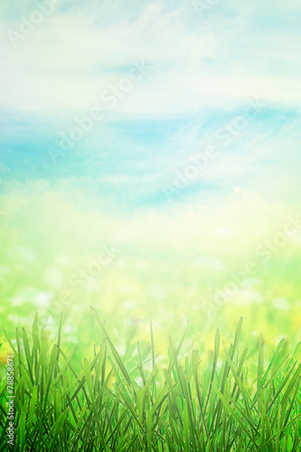 canvas print picture Spring field in morning