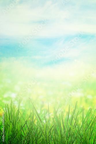 Spring field in morning - 78858671