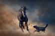 Beautiful black stallion with dog in desert