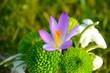 Obrazy na płótnie, fototapety, zdjęcia, fotoobrazy drukowane : Frühlingsblume