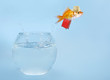 Leinwanddruck Bild - Goldfisch springt aus Glas