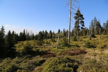 Landschaft im Nationalpark Harz