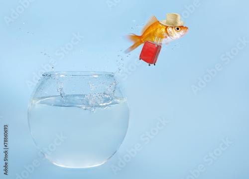 Leinwanddruck Bild Goldfisch springt aus Glas