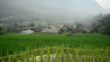 Pan Up of Farm House with Rice Terraces in Green Valley -  Sapa Vietnam