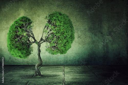 Leinwanddruck Bild green tree shaped like human lungs growing from concrete floor
