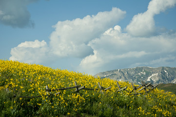 Hills of Colorado covered with wildflowers.