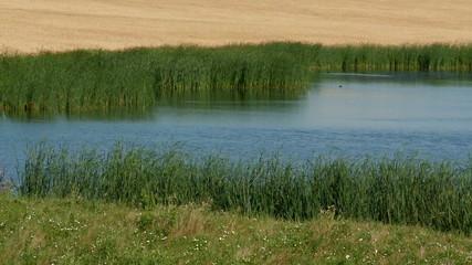GrassPond4-2011