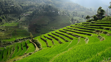 Zoom Out - Scenic Rice Farm Terraces - Northern Mountains of Sapa Vietnam