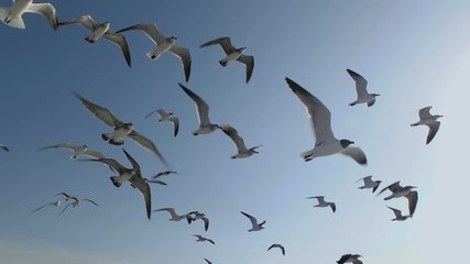 Seagulls And Birds Flying In Group On Blue Sky Super Slow Motion