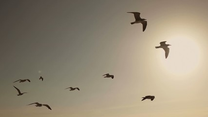 Seagulls And Birds Flying In Sky At Sunset In Super Slow Motion