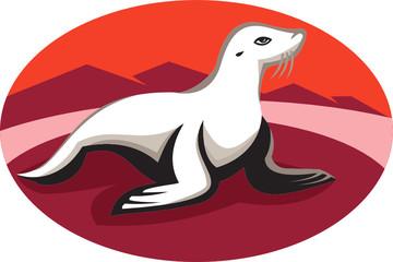 New Zealand Fur Seal Retro