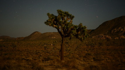 Time Lapse of Joshua Tree and Aircraft and Stars in the Desert Sky
