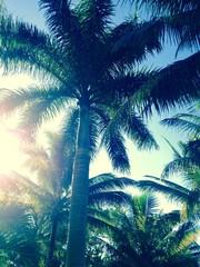 under tropical sky