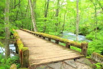 Wooden bridge over the Oirase Stream, Aomori, Japan