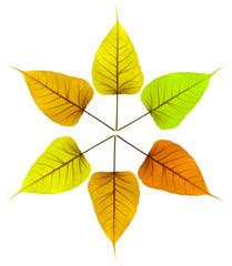 ronde des feuilles sèches