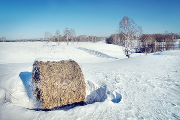 Bright winter landscape with rolls of hay on the snowy field