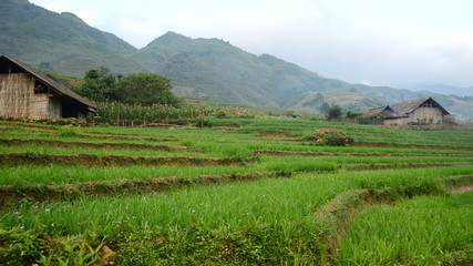 View of  Farm with Rice Terraces in Valley Sapa Vietnam