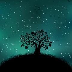 Tree silhouette night time, stars, sky