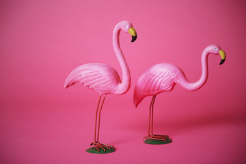 Pink flamingoes in studio