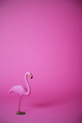 Pink flamingo in studio