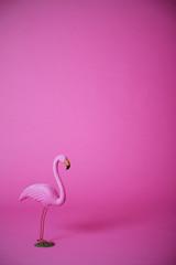 Pink flamingo in studio