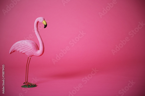Pink flamingo in studio - 78879435
