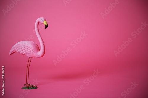 Pink flamingo in studio - 78879435