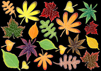 bright autumn leaves on black background