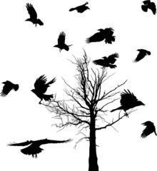 black bare tree and crows silhouettes isolated on white
