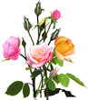 Obrazy na płótnie, fototapety, zdjęcia, fotoobrazy drukowane : bunch of yellow and pink isolated roses