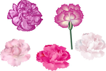 set of five isolated pinks
