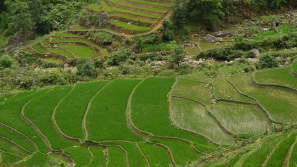 Zoom Out of Scenic Rice Terraces in Northern Vietnam -  Sapa Vietnam